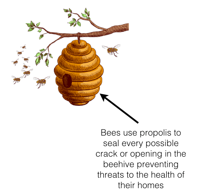 bee-hive-tree.png