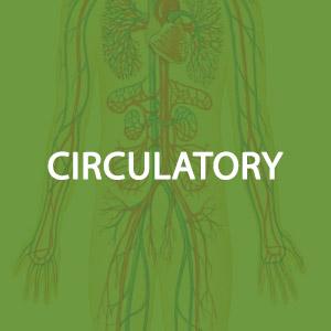 circulatorio.jpg