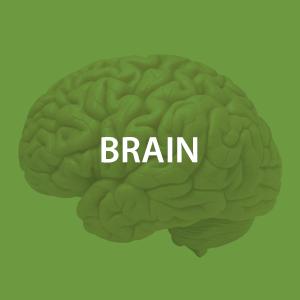 mwz-brain.png