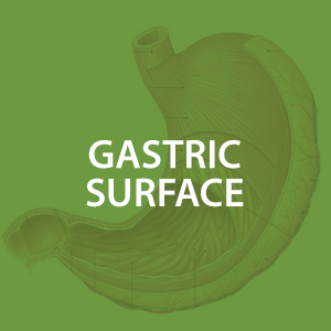 mwz-gastricsurface.png