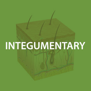 mwz-intergumentary.png