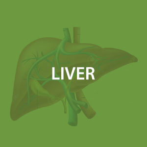 mwz-liver.png