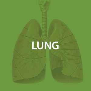 mwz-lung.png
