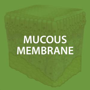 mwz-mucousmembrane.png