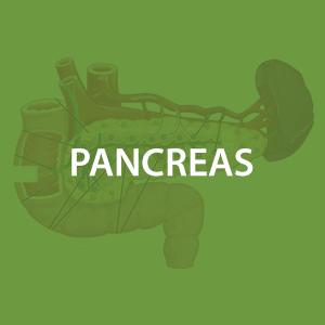 mwz-pancreas.png